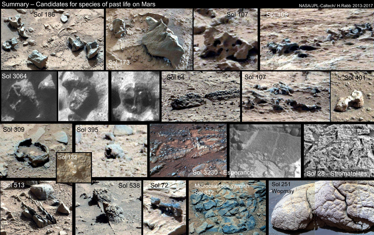 life in mars essay For years, planet mars has been in the nasa spotlight the red planet has been explored as images, atmoshpere samples and samples of various surface formations have been collected to continue research in labortories here on earth.